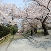 【朝京都】桜の時期の蹴上インクライン・南禅寺おすすめ朝ルート【河原町~インクライン編】