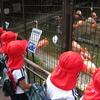 年少中組園外保育~王子動物園~