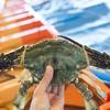 2017年7月3日 小浜漁港 お魚情報