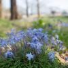 桜の他にも春の花:中央植物園