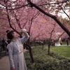 武漢大学の和服花見事件について思うこと。