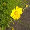 今日のマヤ暦 K45 赤い蛇・黄色い太陽の6日目