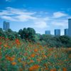 【撮影記】浜離宮恩賜庭園はキバナコスモスにアゲハが舞う都会のオアシス