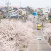 アップダウンが楽しい桜道:伏木・十間道路