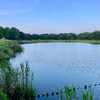 舎人公園の大池(東京都足立)