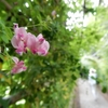 9月の殿ヶ谷戸庭園に行ってきました