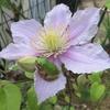 「花火の日」に庭先で見た「花鳥風月」と、部屋で聴いたレトロな名曲とは?