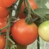 コロナ後の農と食を考える
