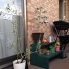 ベランダ菜園とアボガトの種のはなし