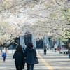 Snapshot@桜の風景#4