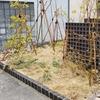 2020/2021年 富山県大雪 我が家の庭の被害状況