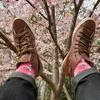 【なおやん撮り】桜のハッピーソックスの日本的コラボレーション