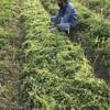 【畑】祈るように種まきしよう