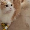 猫のリハビリ生活の始まり!歩けるようになるまでの道のりその①
