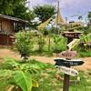 【旅時記・奈良#1】鬼の峠を越え、山羊の庭でスリランカのドライカレーを食べる
