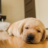 寝起きが悪くなかなか起きれない人!目覚めが良くなる究極の方法!