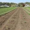 農園日誌Ⅱー「活きる」ーPART13ー自然の試練