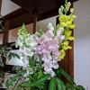今日のお花とアクアリウム