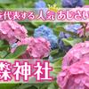 京都を代表する人気あじさいスポット「藤森神社」が誇る紫陽花苑