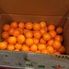 金柑の便りと干し芋…我が家のミニミニ植物園?