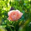 "Lisa Jewell(リサ・ジュエル) ""The Girls in the Garden"" あらすじ・感想"