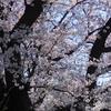 プレバト・ランキング 俳句 ≪3月26日木≫