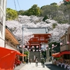 おうちでオンライン花見はいかが?2021年の「桜ドローンプロジェクト」は、和歌山県の紀三井寺からお届け