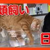 透明な箱で遊ぶ猫たち。猫のほのぼのする日常の一コマ。Cats playing in a transparent box.