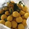 【簡単おいしい柚子茶の作り方】残った梅シロップを再利用しました。