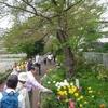 春の元気もらう 練馬区・田柄川緑道から光が丘公園へ