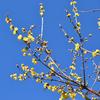 「早春の花」に会えました😋🌸。