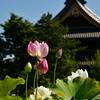[『島根県益田市で39.3℃ 観測史上1位の高温続出』を読んで