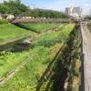 【笹目川のほとりを】 笹目川というドブ川が(?)、埼京線に沿って、武蔵浦和駅と北戸田駅の間ぐらいを流れている。近くに「赤き血のイレブン」(高校サッカー)でお馴染みの浦和南高校がある。 ここの川沿いの道が、私の散歩コースの一つだ。 今日は、早朝(6:00)から歩いた。