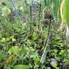 """畑からこんにちは!😃 210423    """"野菜の成長が少しずつ感じられる楽しみ☝️😊"""""""