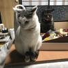 5匹の猫がお出迎え! ゲストハウスやまねこさんを訪問☆