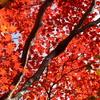 日光の紅葉シーズン間もなく到来~*オススメスポット*画像で紹介*