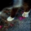 曹洞宗 真光寺にて地域猫作品展を開催