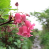 ◆7/1     月山…花を眺めながら②