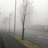 霧の中をウォーキング!不思議な世界でした