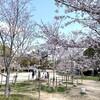2020年 桜咲く