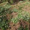 お山の庭の裏バン