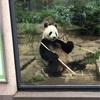 上野動物園 二回目