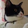今日の黒猫モモ&白黒猫ナナの動画ー852
