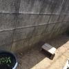 庭の草むしりした、さっぽり~(*'▽')