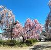 今年は弘前公園(弘前城)の桜まつりに行けました