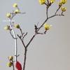 春の花、山茱萸