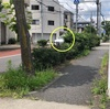 駐車場出口の歩道低木