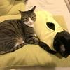 お互いを湯たんぽ代わりにする猫たち