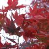 連休も終わり紅葉も見た、後は何をすればいい?