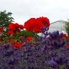 プライムポタリング探訪~百合が原公園の様子「誰がためにユリは咲く?」